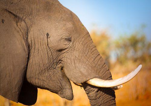 elefante green