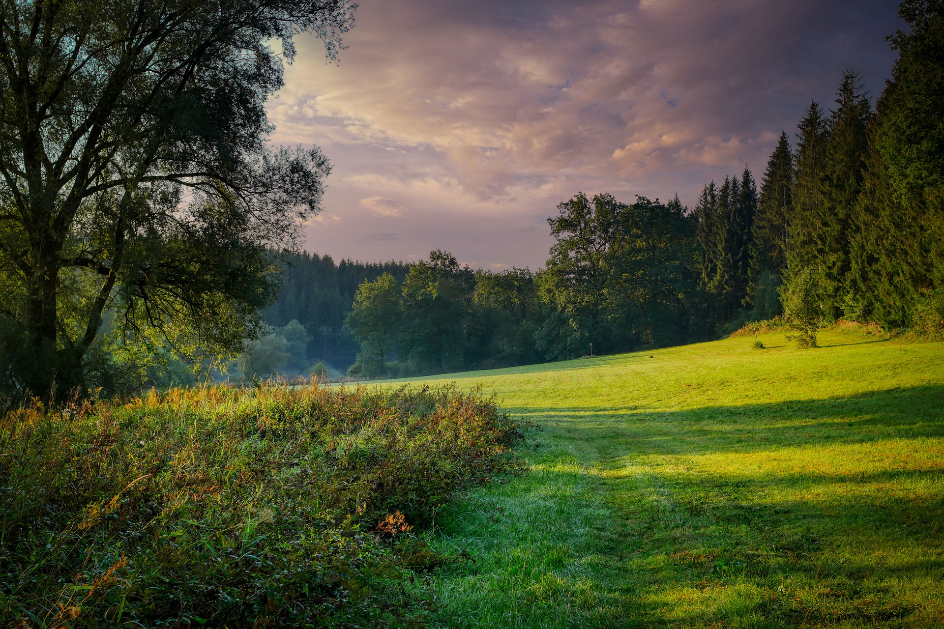 foresta verde green impact